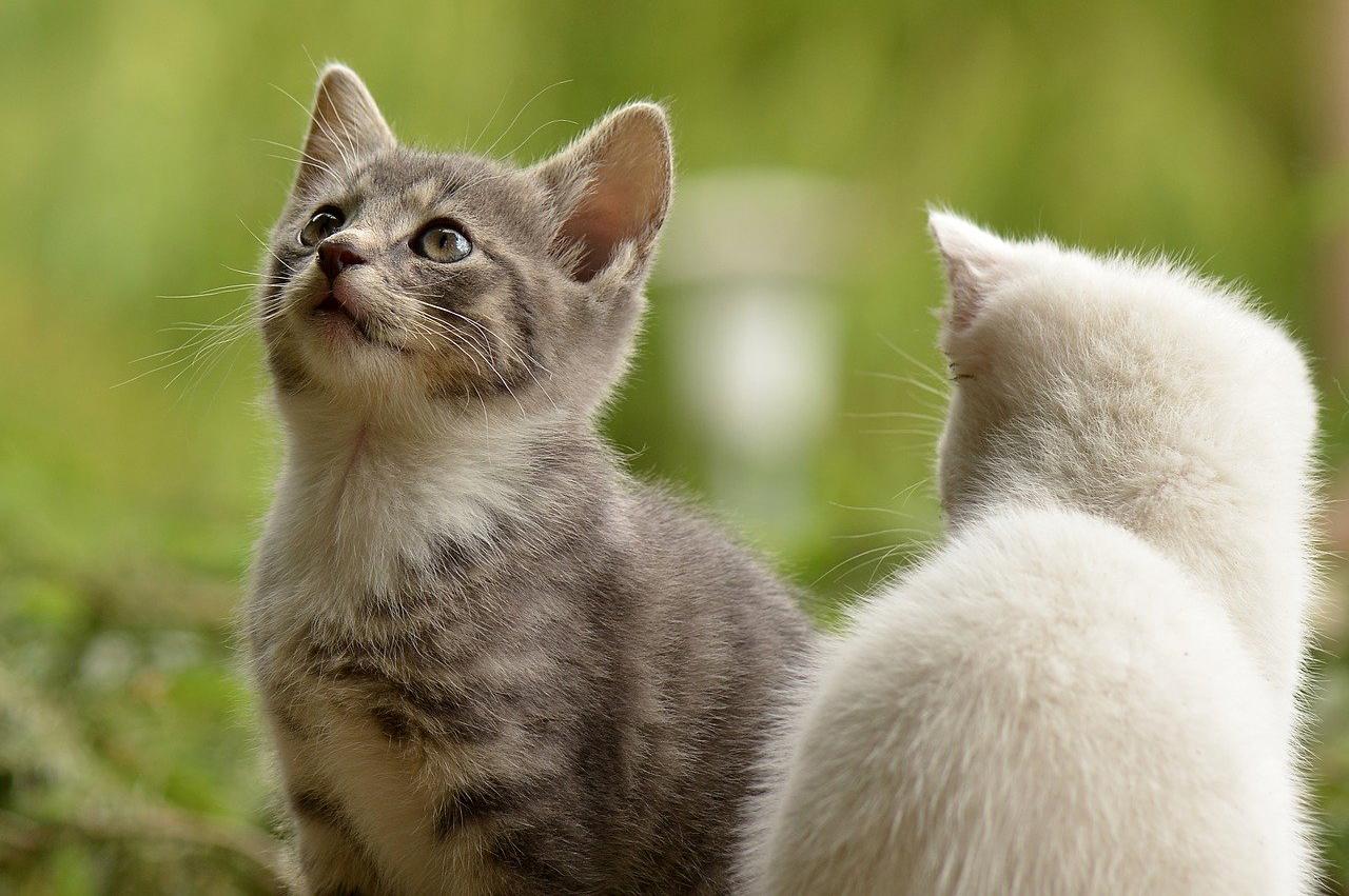 Two kittens outside
